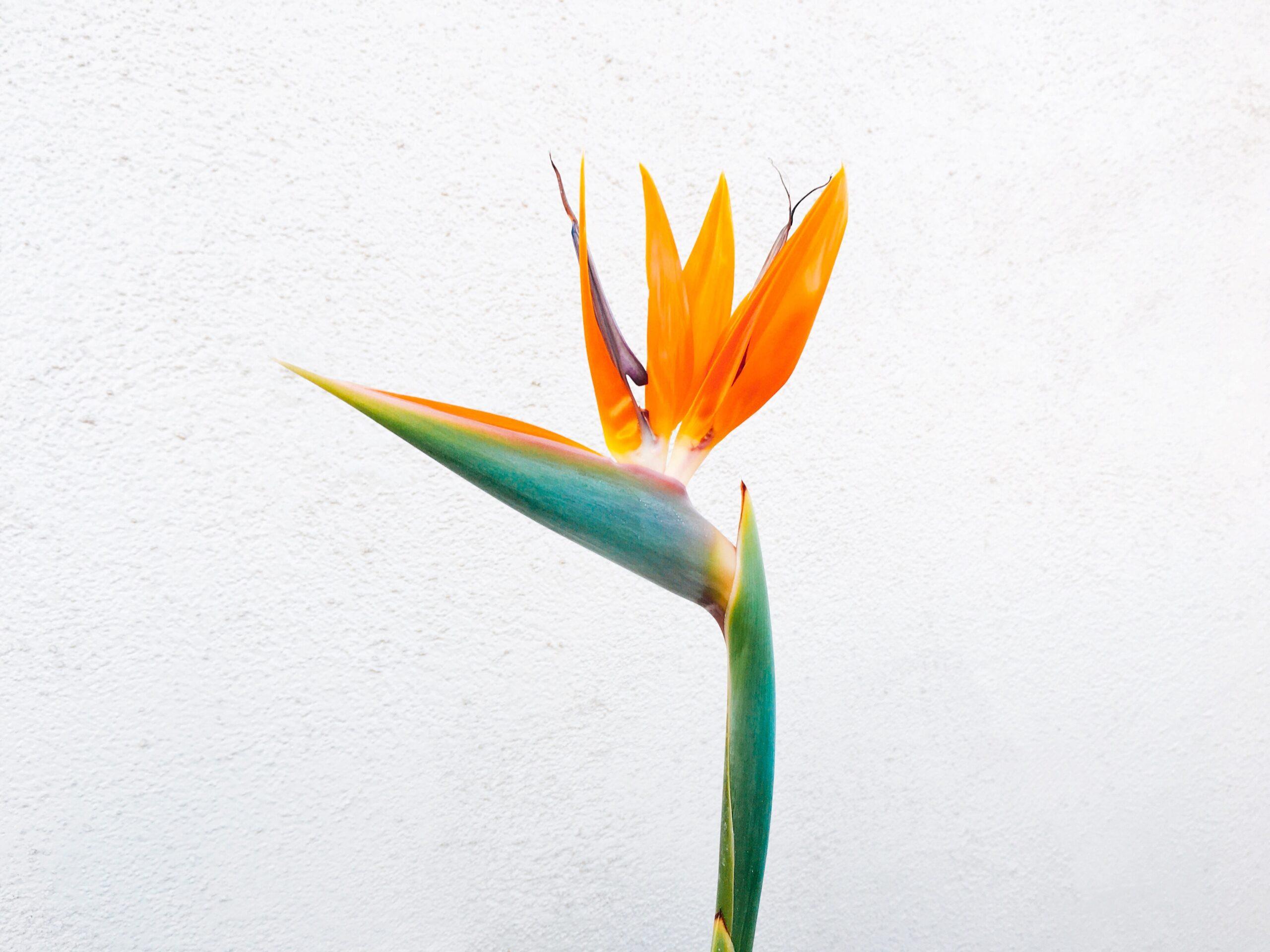 À la Boîte à Fleurs